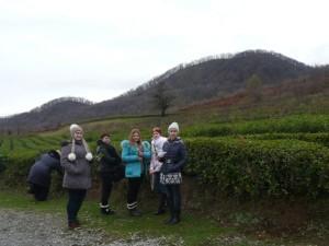 собираем чай на плантации в Горном Эдеме п. Лоо
